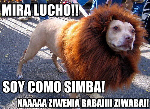 lucho